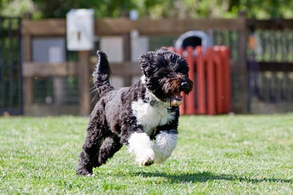dog-active