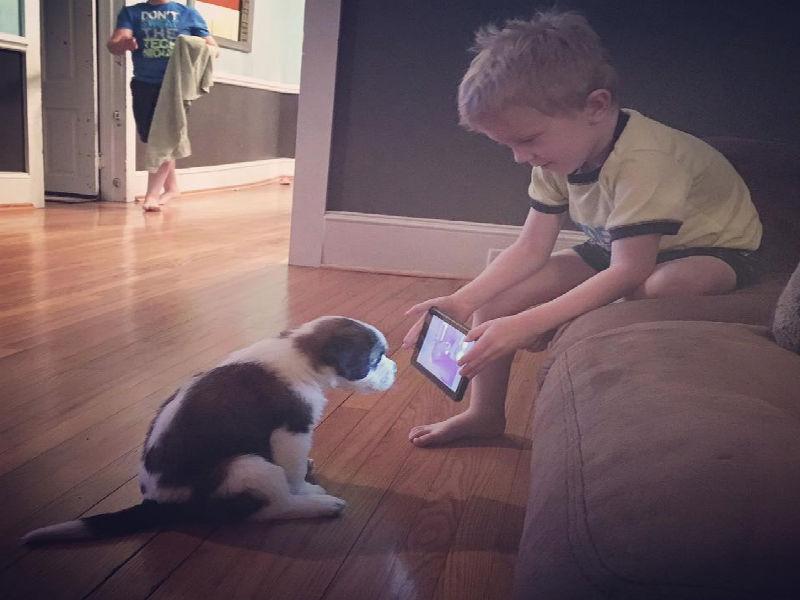 boy trains dog with iPad