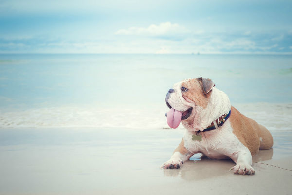 dog_beach_body_image