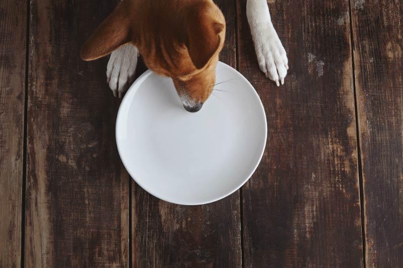 Can I Give A Nursing Dog Pepto Bismol