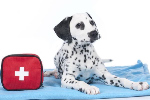 Dog First Aid Kit Essentials