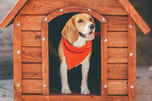dog_house_body_image_