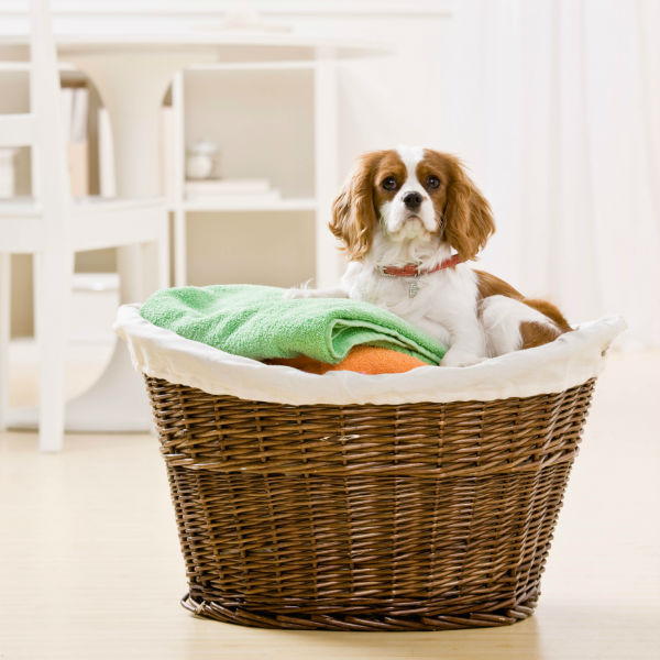 Dog in a laundry basket