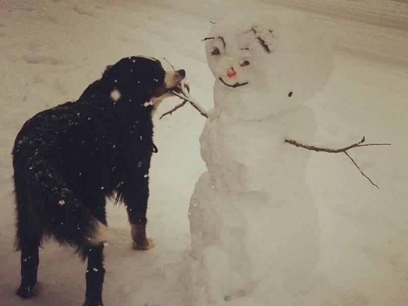 dog snowman header