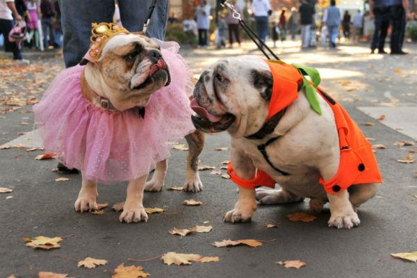 dog soulmates
