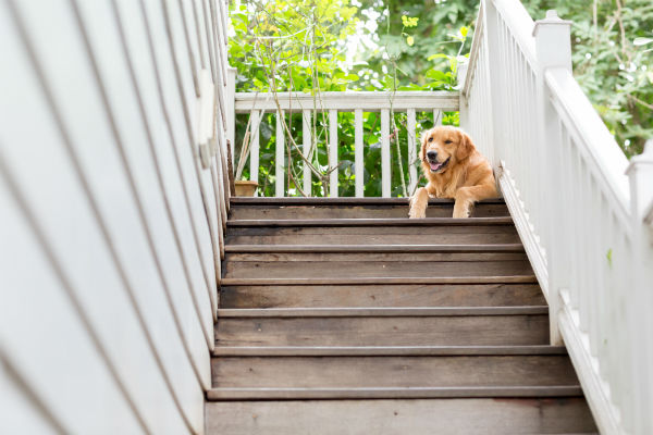 6种方式帮助你的高龄狗