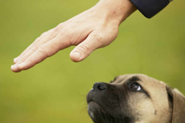 dog training person hand