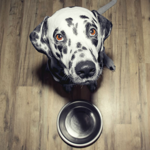 dog_with_bowl