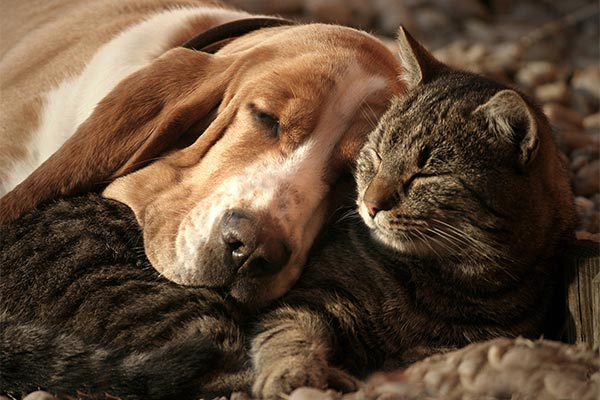 dogs-and-cats-sleeping-body.jpg