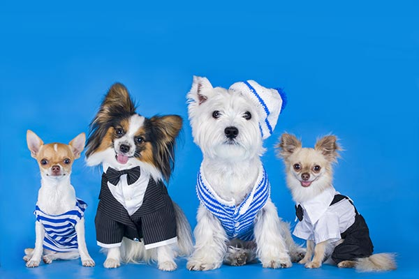 dogs-on-blue-body