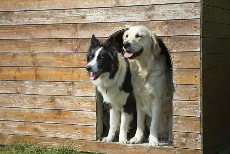 How to get your kennel ready for hot weather american for Ready dog kennel