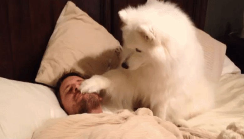 Dogs waking owner up