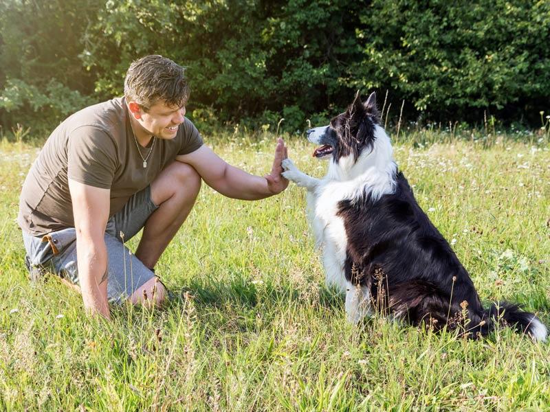 dog high-five