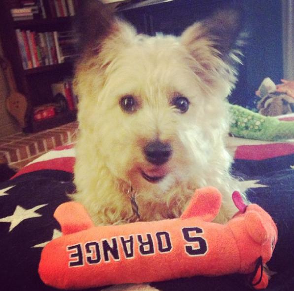 Duncan Syracuse Dog