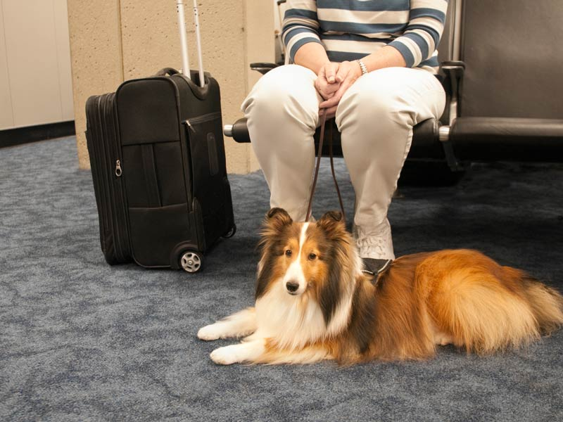 dog and owner flying on a plane together