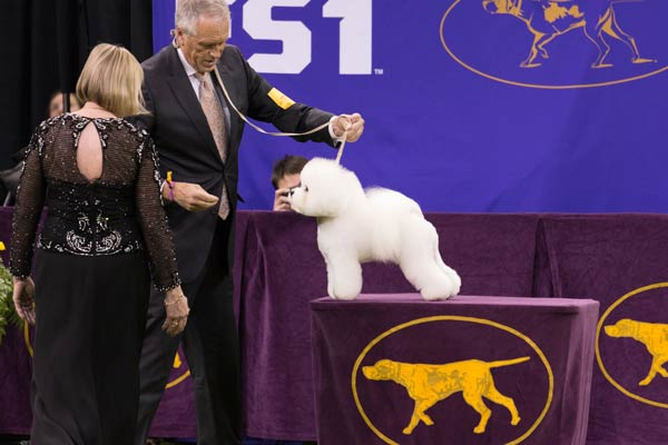 AKC SHOW BEST OF WINNER
