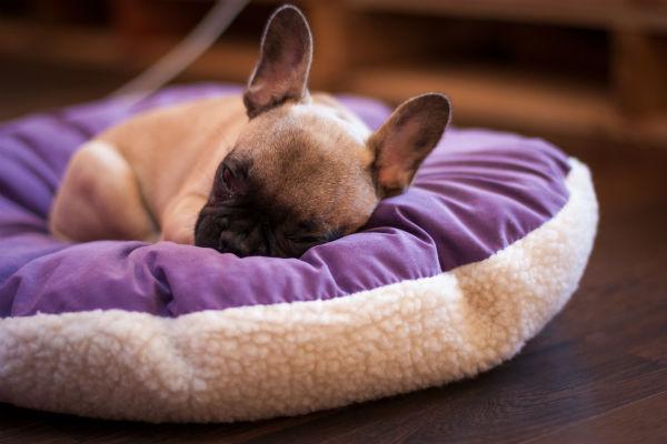 How Much Do Puppies Sleep