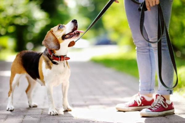 friendly_beagle