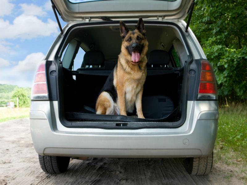 german in a car