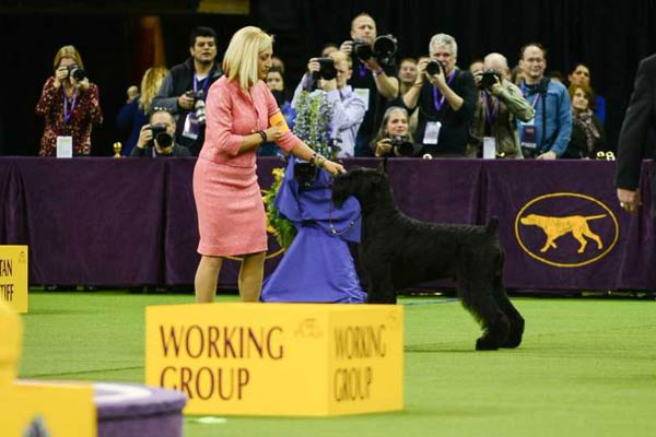 Westminster Dog Show 2018 Group Winners Best In Show
