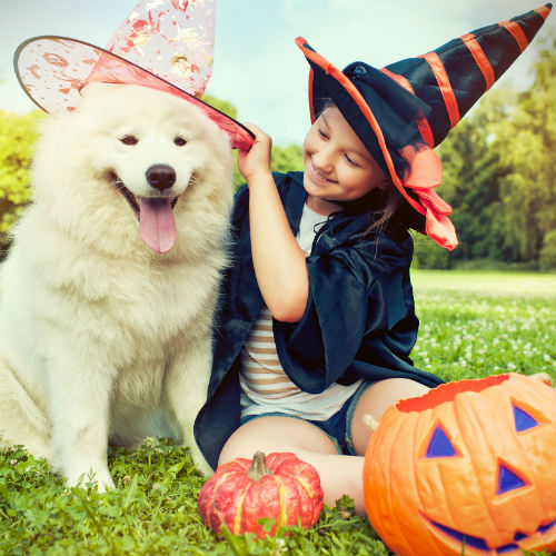 girl and samoyed halloween