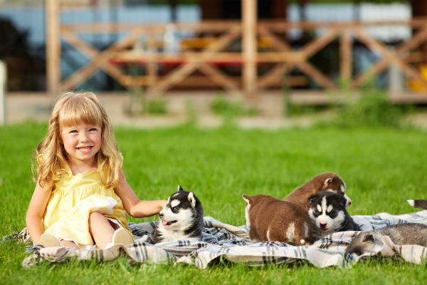 girl with husky pups