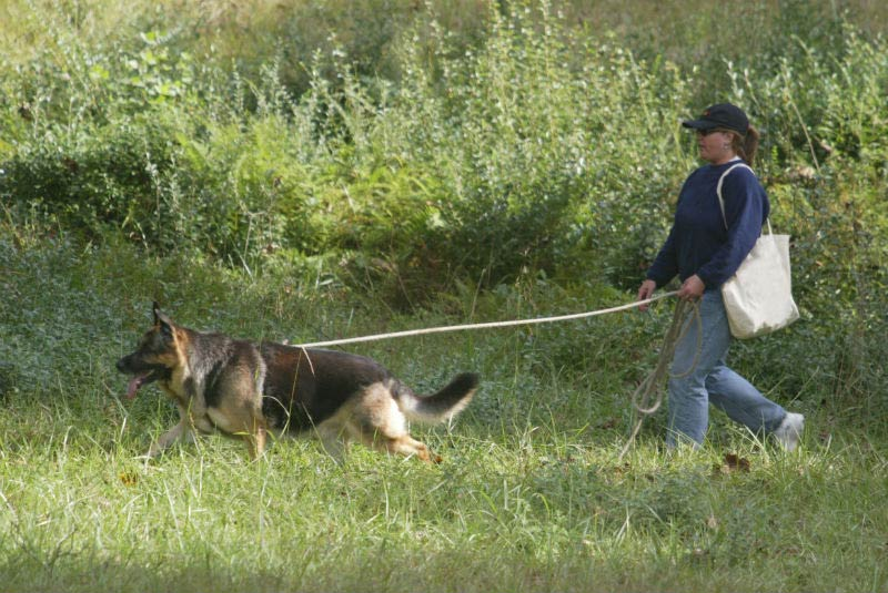 gsd tracking