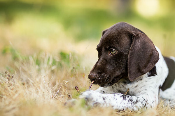 Funny Name For A Pointer Dog