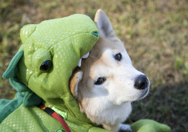 your ultimate dog halloween costume guide
