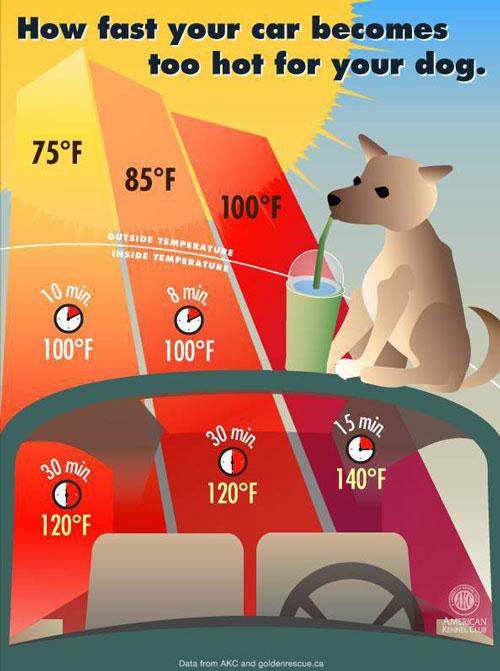 hotcar infographic
