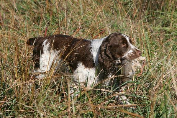hunting_dog_names_body_image_1