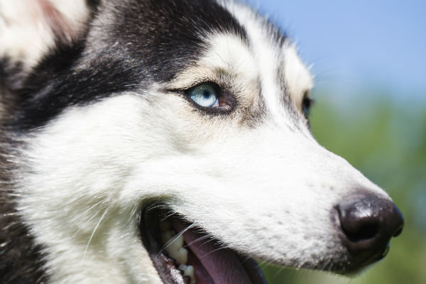 What You Should Know About Canine Deafness – American Kennel
