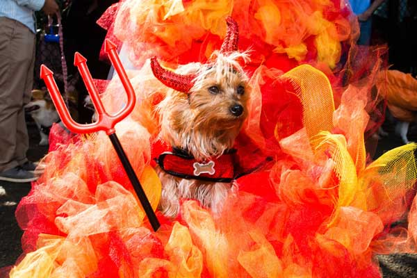 inferno-dog