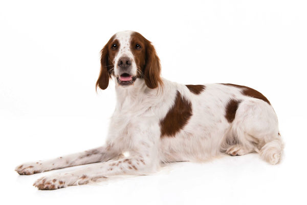 How To Know Which Dog Breed Is Right For You