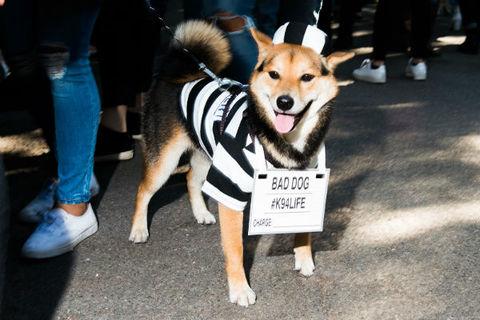 jailhouse_dog_480