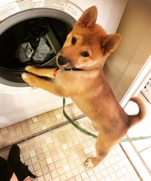 laundry_chiyo