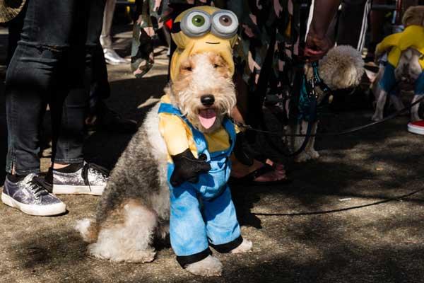 minion-dog