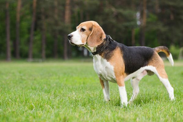 старая собака 2