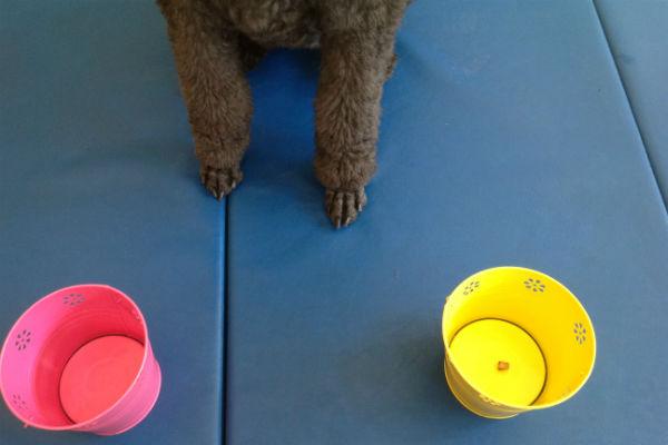 poodle feet buckets