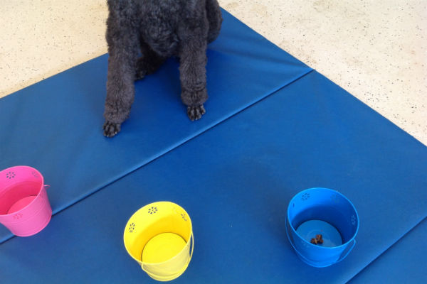 poodle feet three buckets