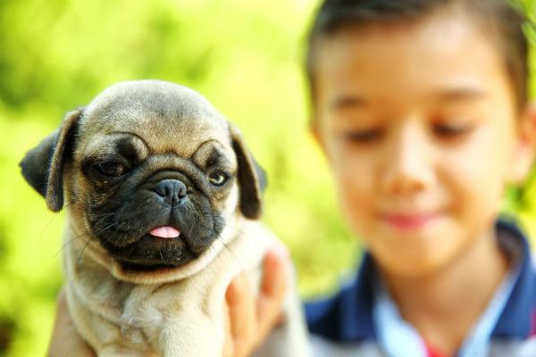 pug_best_friend