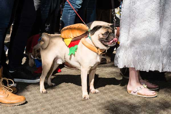 pugburger