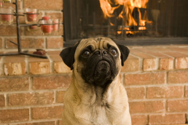 pug in front of fireplace