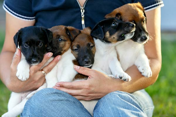 puppies-names-body-image.jpg
