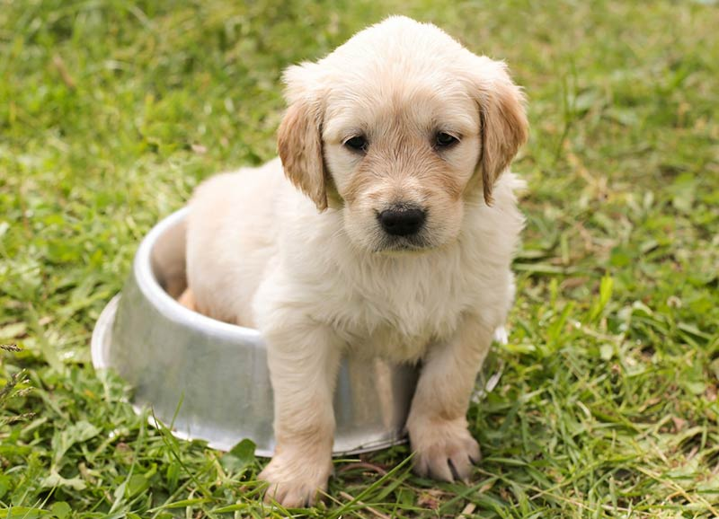 Best Dog Food Choosing Whats Right For Your Dog