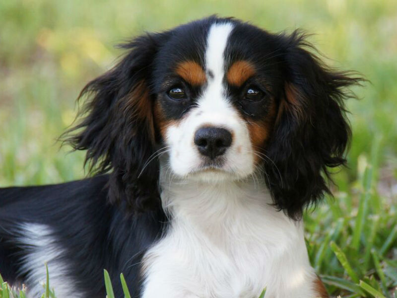puppy adolescent changes