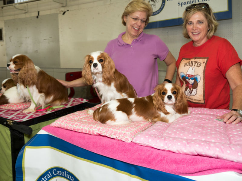 responsible dog owner event