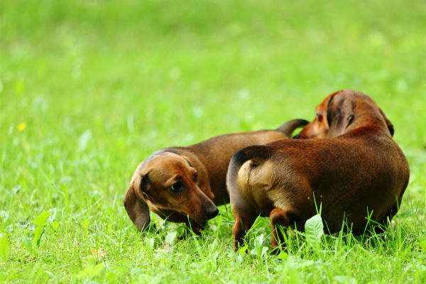 Ringworm in Dogs — Symptoms, Treatment, and Prevention