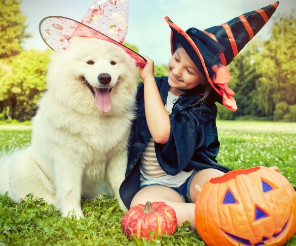 帮助让您的狗的万圣节服装愉快的经历