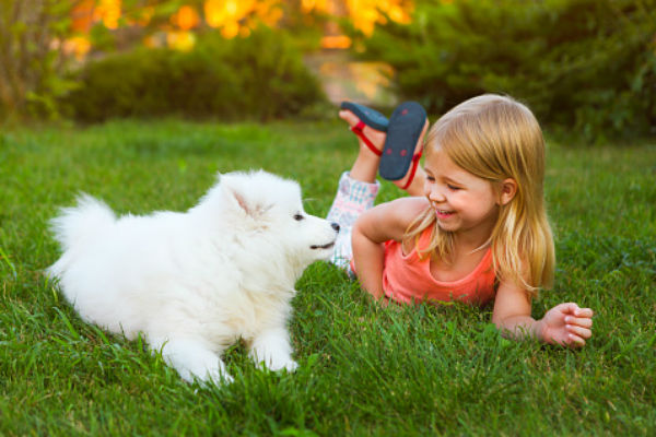samoyed_puppy_and_girl_